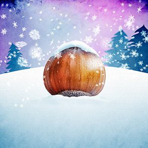 Dance under the Frozen Hazelnut